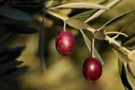 Huile d'olive 100% Arroniz
